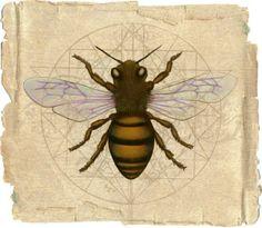Bee Painting, Bee Illustration, I Love Bees, Bee Skep, Bee Tattoo, Tattoo Art, Bee Art, Bees Knees, Fauna