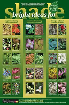 Bright Ideas for Shade: Link to Great Plant Picks Lists and Search Page
