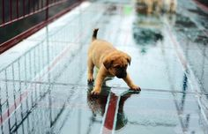 Whew that was a close one! Several stray puppies recently got stranded on a 590-ft tall bridge at the Shiniuzhai Scenic Spot in China. The bridge, one of t