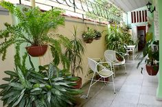 Beny and Roberto Hostel terrace