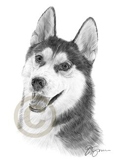 T-Shirts Pets Funny Cute Siberian Husky Dog and Circle Pattern Abstract Art 3dRose All Smiles Art