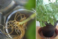 Herbs, Plants, Food, Essen, Herb, Meals, Plant, Yemek, Eten