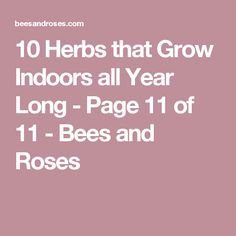 10 Herbs that Grow Indoors all Year Long - Page 11 of 11 - Bees and Roses