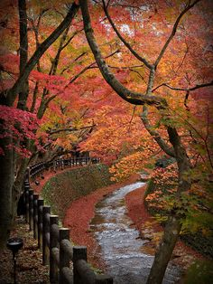 Kyoto, Japan.  Have only seen it in summer, would love to go back in the fall.
