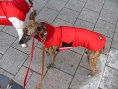 Greyhound Winter Dog Coat - Dog Jacket with snood and underbelly protection - Waterproof / Fleece coat + turtleneck / snood - MADE TO ORDER Dog Winter Coat, Dog Jacket, Dog Wear, Creature Comforts, Dog Coats, Dog Breeds, Your Dog, Turtle Neck, Beige