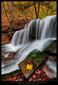 Forest Waterfalls - By Jim Davis