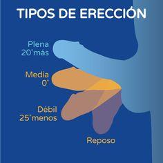 Tipos de erección gráfico Boston Medical Group España