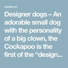 """Designer dogs – An adorable small dog with the personality of a big clown, the Cockapoo is the first of the """"designer dogs"""" (not a """"pure"""" dog breed), dating back to the 1960s rather than to just a few years ago."""