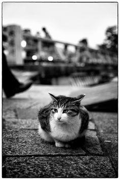猫にゃん : 写真部