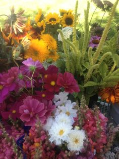 Cosmos adds such a color punch to the fall lineup of flowers.  Teddy bear sunflower and green amaranthus.