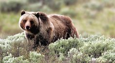 Výsledek obrázku pro medvěd