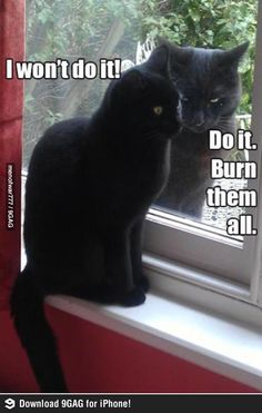 Evil cats. I'm laughing so hard at their expressions.