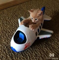 And we're off:) Omg how cute is this ........adorable...