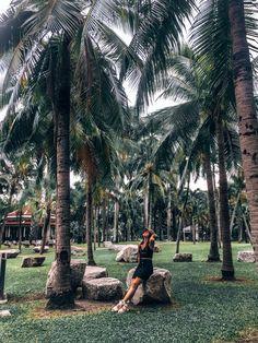 Palm Trees | Thailand Travel | Asia Travel | Women who explore | Thailand Park | Lumphini Park | Travel Photography | Travel Girl | Thailand Travel Guide Thailand Travel Guide, Asia Travel, Central Park, Dolores Park, Palm Trees, Bangkok, Travel Photography, Explore, Women
