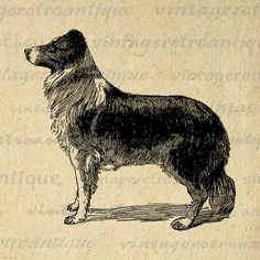 Printable Digital Images with Vintage & Antique Art by VintageRetroAntique Antique Illustration, Dog Illustration, Illustrations, Dog Clip Art, Burlap Background, Sell Stamps, Printable Animals, Collie Dog, Border Collie