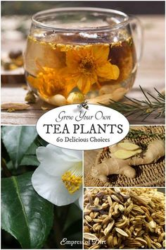 If you love drinking tea and gardening. why not grow your own speciality teas? This list shows a variety of plants you grow for their leaves. and roots to produce delicious. Tea Plant, Homemade Tea, Growing Herbs, Growing Tea, Tea Blends, Edible Flowers, Medicinal Plants, Tea Recipes, Drinking Tea