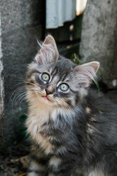 Photography. Cats. Kitten. Farm Kitten. Cute Baby Animals.