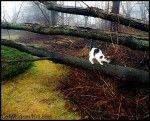 Cat Wisdom 101   To enlighten & entertain cat lovers everywhere