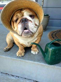 Jane Austen doggy...