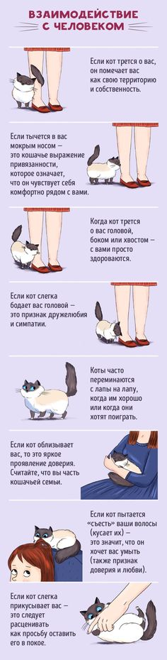 to Find a Common Language With Your Cat Cats have their own language, and if you manage to learn it you will be rewarded!Cats have their own language, and if you manage to learn it you will be rewarded! Crazy Cat Lady, Crazy Cats, Cute Cats, Funny Cats, Adorable Kittens, Cat Info, Cat Behavior, Behavior Plans, All About Cats
