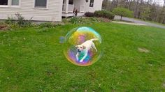 This Dog Stuck In A Bubble