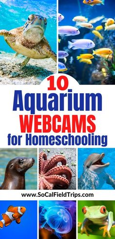 Do you find yourself suddenly homeschooling and need more activities to keep your kids busy? Check out this list of 10 Aquarium Webcams For Homeschooling that are sure to make your kids excited about learning! virtualfieldtrip #virtualfieldtrips #onlinelearning #homeschool #homeschooling #homeschoolmom #homeschoolschedule #homeschoollife #homeschoolactivities #education #teacherspayteachers #homeschoolteacher #teaching