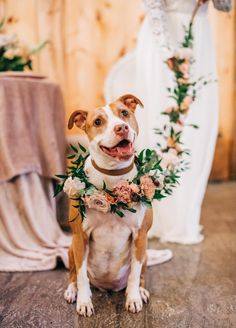 Dog floral leash and collar Greenery leash with floral Diy Wedding Flowers, Bridal Flowers, Floral Wedding, Dog Wedding Outfits, Dogs In Wedding, Wedding Vendors, Weddings, Dream Wedding, Wedding Shit