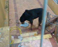 """""""O Grito do Bicho"""": Protetores de animais denunciam maus tratos a cães..."""