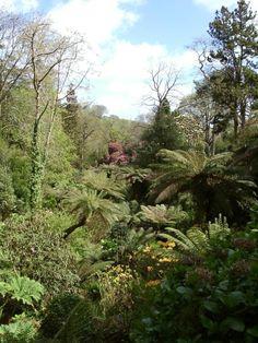 Lost Gardens of Heligan - UK