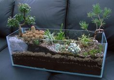 For the failed hobby aquarist — transform your aquarium tank into a dry terrarium.