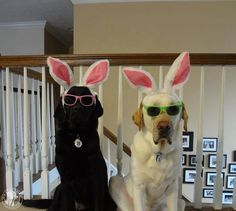#Easter Bunny #Labradors | It's a Lab Thing