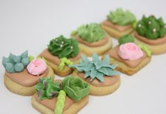 I'm in Love, I'm in Love and I just can't hide it 💕 🌵  Totally crushing on these mini succulent cookies we are doing for a wedding.