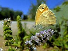 ΟΡΘΟΔΟΞΗ ΠΙΣΤΗ: Άνθρωπος και Περιβάλλον κατά τον Μέγα Βασίλειο