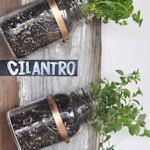 12 ways to plant a herb garden