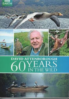 David Attenborough : 60 years in the wild  (BBC Earth)