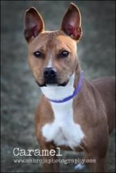 Caramel is waiting for her forever home at the Cedar Valley Humane Society!