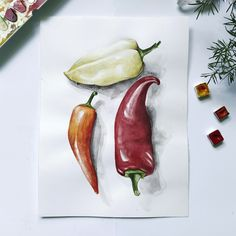 Botany, Biology, Stuffed Peppers, Illustrations, Watercolor, Vegetables, Food, Pen And Wash, Watercolor Painting