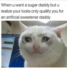 Memes Humor, Sarcasm Humor, Cat Memes, Sarcasm Quotes, Crush Memes, Disney Memes, Spongebob, Funny Relatable Memes, Funny Jokes