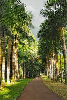 Palm Trees Landscaping, Driveway Landscaping, Bahamas House, House Outside Design, Driveway Lighting, Art Cube, Village House Design, Tropical Garden Design, Landscape Lighting Design