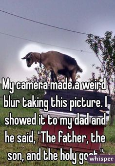 "Someone from Armagh posted a whisper, which reads ""My camera made a weird blur taking this picture. I showed it to my dad and he said, ""The father, the son, and the holy goat. Whisper Funny, Whisper App, Funny Jokes, Hilarious, Funny Goat Memes, Dog Jokes, Funny Pets, Whisper Confessions, Bae"