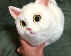 These Incredibly Realistic Cat Purses Are The Accessories Of Your Dreams And Nightmares