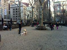 nyc dog runs - Google Search Dog Runs, Street View, Nyc, Running, Park, Google Search, Dogs, Keep Running, Pet Dogs