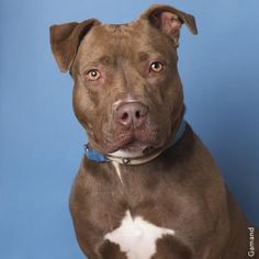 Faith - URGENT - Town of Hempstead Animal Shelter in Wantagh, NY …