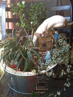 Faerie house from a gourd in a tin bucket with trimmed boxwood for a tree, creeping ficus growd cover and monkey grass.