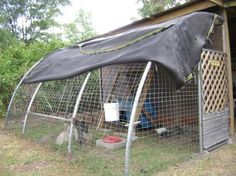 Chicken yard made from a recycled trampoline frame, coop made from 55 gallon drum