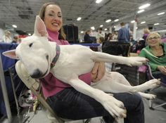 2009 National Dog Show - Behind the Scenes