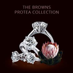 The Protea Collection. This quintessentially South African design has been inspired by our national flower, the King Protea which is a symbol of endurance and strength. As in nature the secret to perfection lies in the balance between function and form. Here petals cradle and protect whilst optimal light enhances the diamond's brilliance and shine. http://www.brownsjewellers.com/
