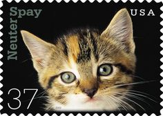 Postage stamp with kitten for spay/neuter campaign