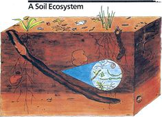 Gardening From the Ground Up Compost Soil, Garden Compost, Garden Soil, Gardening, Soil Conservation, Science Projects, Science Ideas, Soil Improvement, Biomes