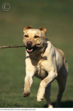 http://www.educarunperro.com/blog/como-ensenar-a-un-perro-a-buscar-y-traer-objetos/